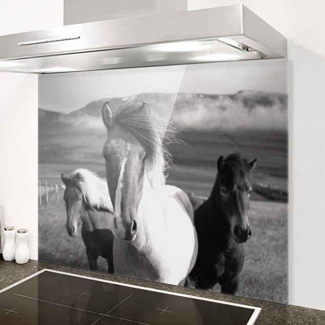 Spritzschutz Glas - Wildpferde Schwarz-Weiß - Querformat 4:3