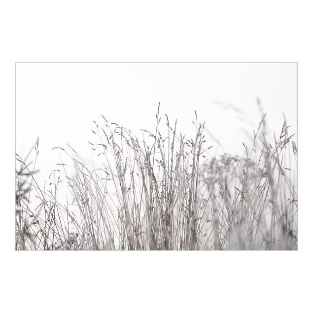 Fototapete - Winterliche Gräser