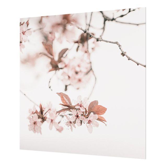 Spritzschutz Glas - Zarte Kirschblüten am Zweig - Quadrat 1:1