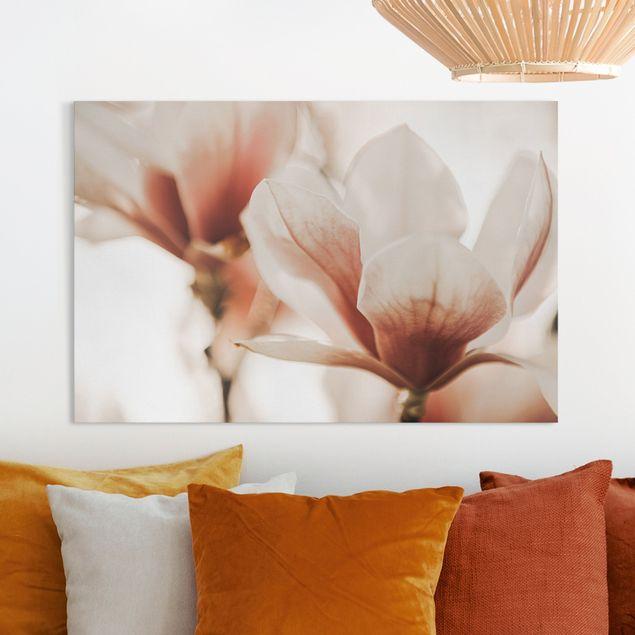 Leinwandbild - Zarte Magnolienblüten im Lichtspiel - Querformat 3:2