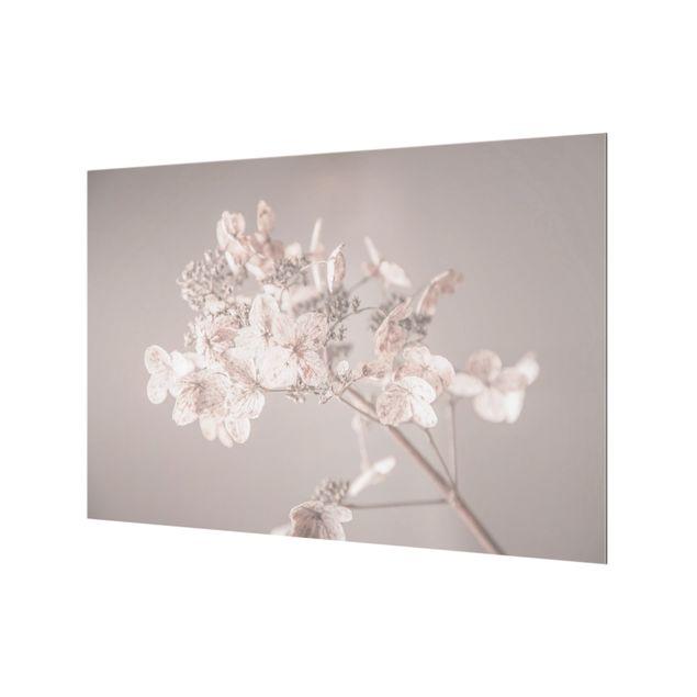 Spritzschutz Glas - Zarte weiße Hortensie - Querformat 3:2