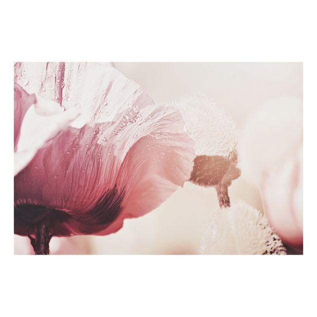 Spritzschutz Glas - Zartrosane Mohnblüte mit Wassertropfen - Querformat 3:2
