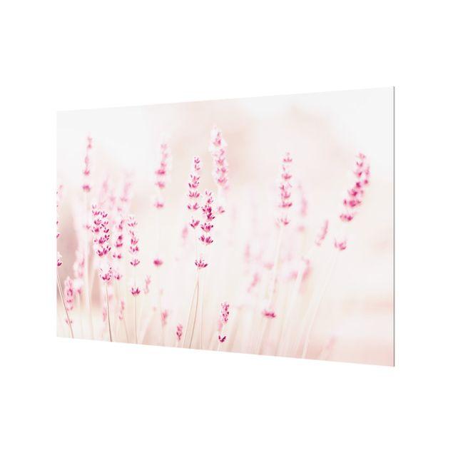 Spritzschutz Glas - Zartrosaner Lavendel - Querformat 3:2
