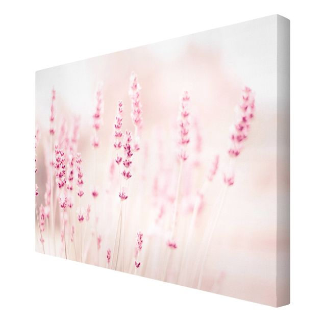 Leinwandbild - Zartrosaner Lavendel - Querformat 3:2